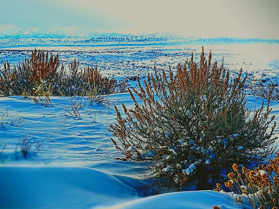 Sky Day Nature Outdoors No People Close-up Beauty In Nature Winter Snow Sagebrush Desert Wyoming Worland