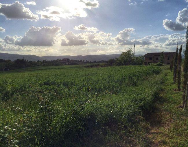 40 acres of Organic Farm in Tuscany, Italy Italy Tuscany Countryside Organic Organicfarm