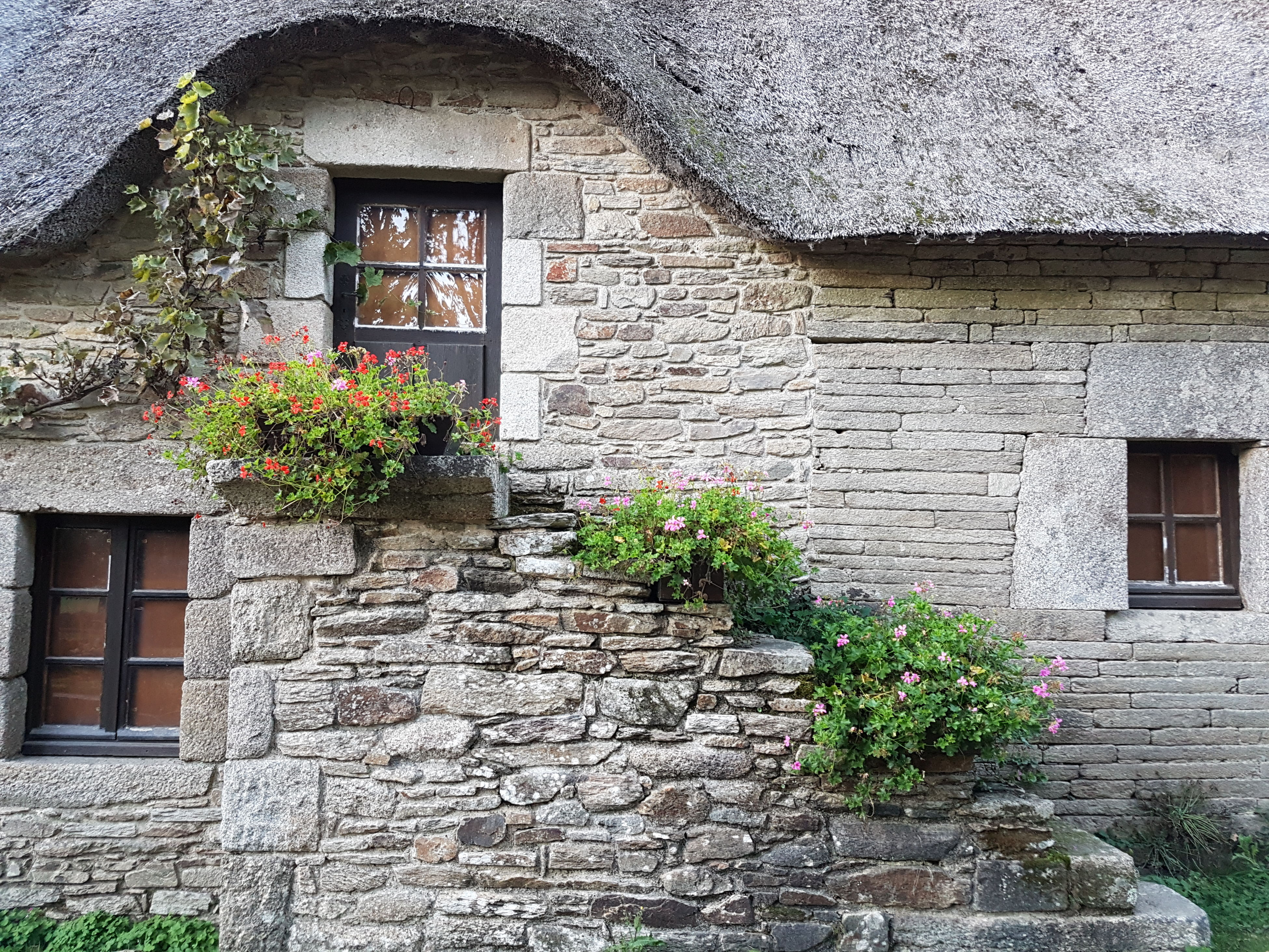 built structure, building exterior, architecture, window, flower, no people, plant, outdoors, ivy, tree, day, window box, creeper plant, freshness, nature