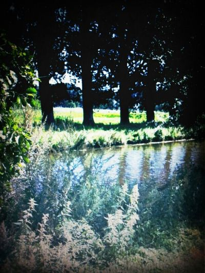 River Nature Walking Smile Netherlands Likes