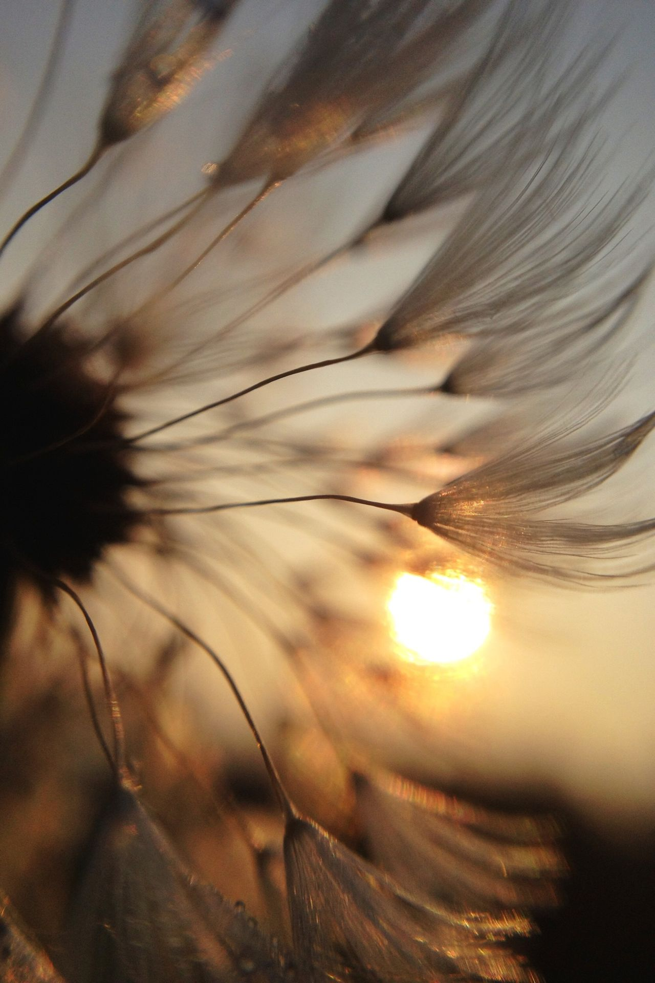 Beautiful stock photos of sun, Beauty In Nature, Bright, Close-Up, Flower