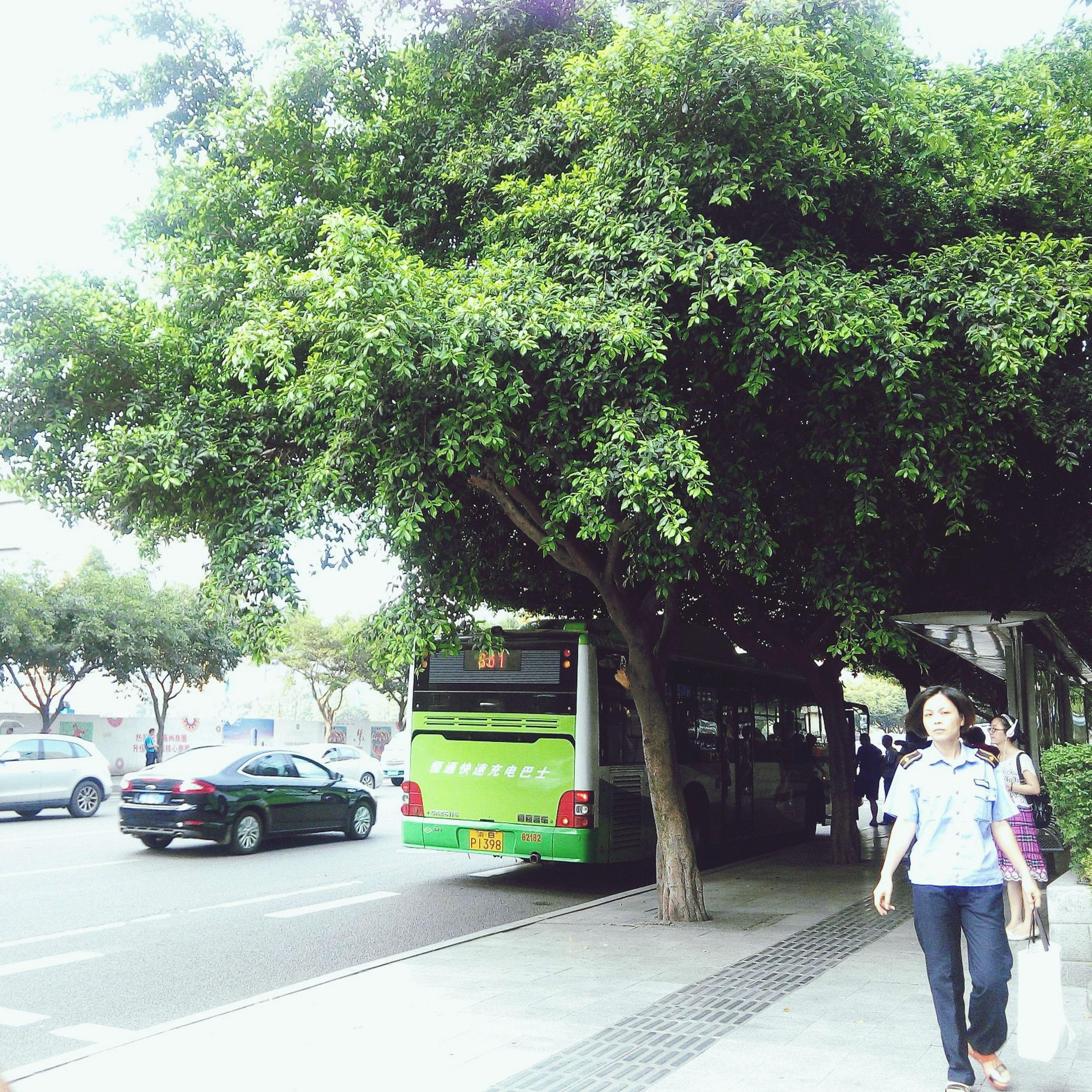 树大好乘凉 Street View Tree Summer ☀