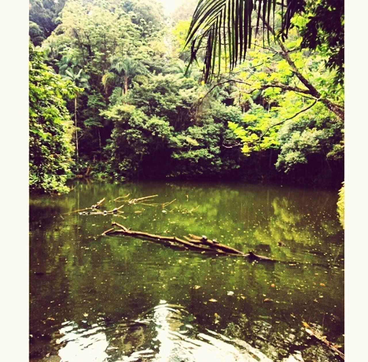 Mata Atlântica Park Nature Nature_collection Walking Around Sunday Feels