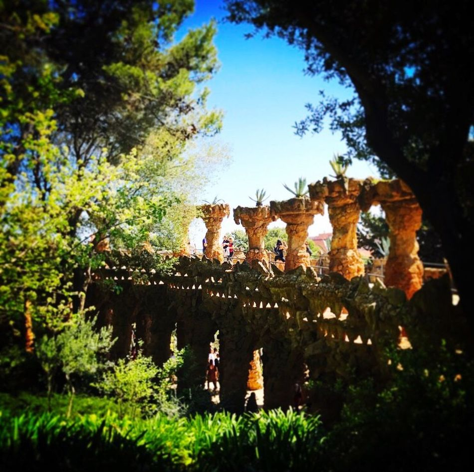 Tree Day No People Outdoors Low Angle View Nature Growth Sky Beauty In Nature Gaudi Pillars View Green Park Guell Park Güell, Barcelona
