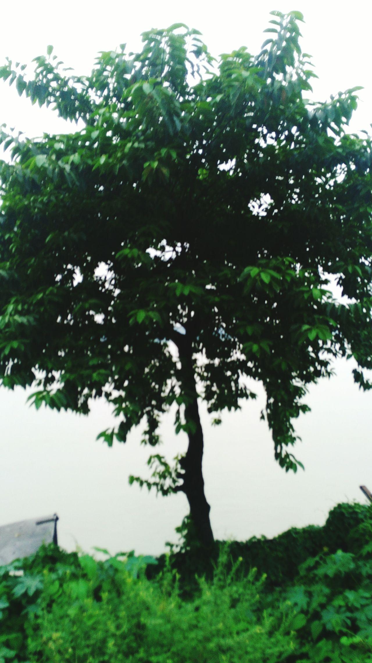 Tree & River