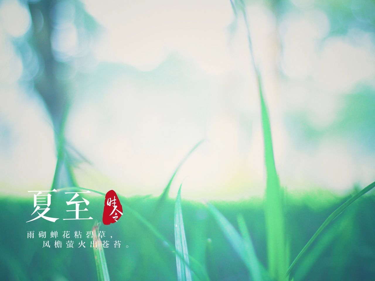 text, communication, green color, day, warning sign, focus on foreground, no people, close-up, red, outdoors, nature, sky