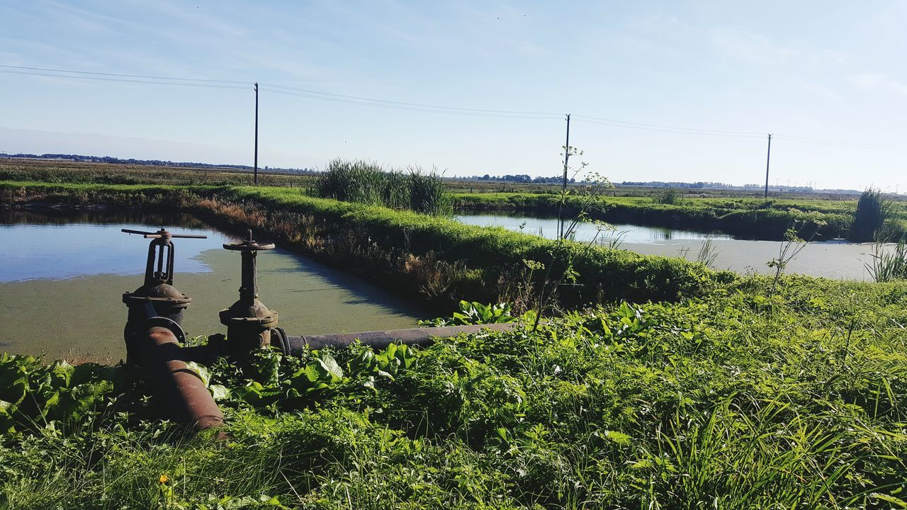 Water Lake Nature Growth Tree Sky Plant Outdoors Day Adults Only Agriculture Metal Pipe Water Plants Summer EyeEmNewHere