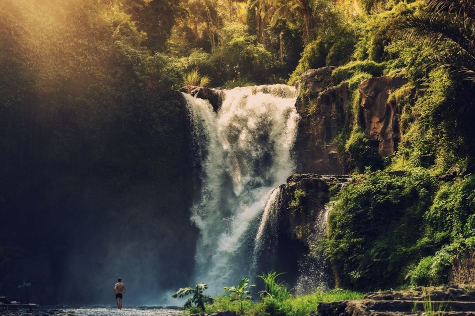 Beautiful stock photos of bali, Beauty In Nature, Day, Flowing Water, Forest
