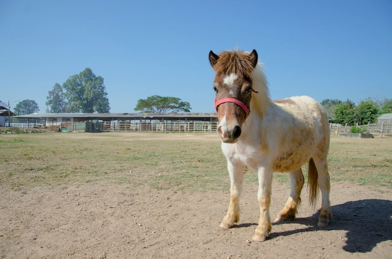 Beautiful stock photos of pony,  Animal Themes,  Clear Sky,  Copy Space,  Day