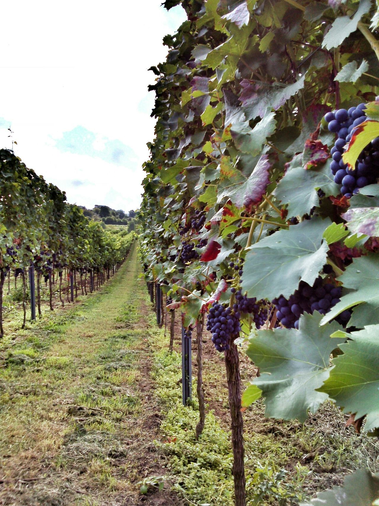 Beautiful stock photos of wine, Agriculture, Beauty In Nature, Cloud, Day