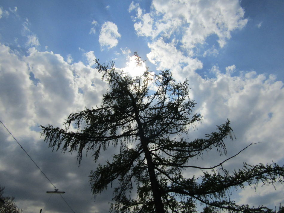 Tree Low Angle View Sky Nature Cloud - Sky Beauty In Nature Growth Day