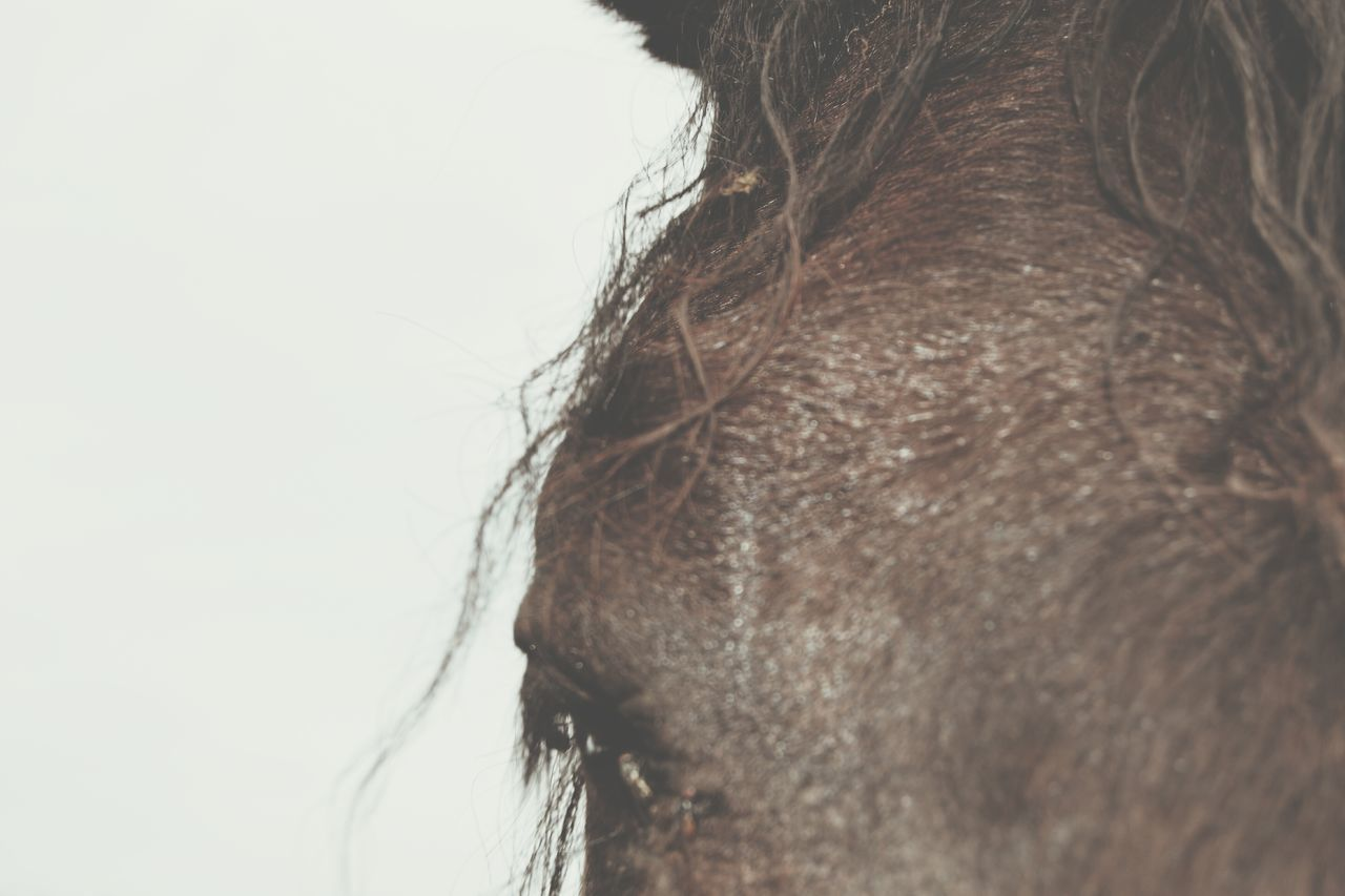 Close-up Outdoors Horse Fur Eye Mane Animal Animal Themes Backgrounds Brown Faded Muted Colors Muted Muted Tones Eyelash Calm Calmness Summer Views Summertime Denmark No People