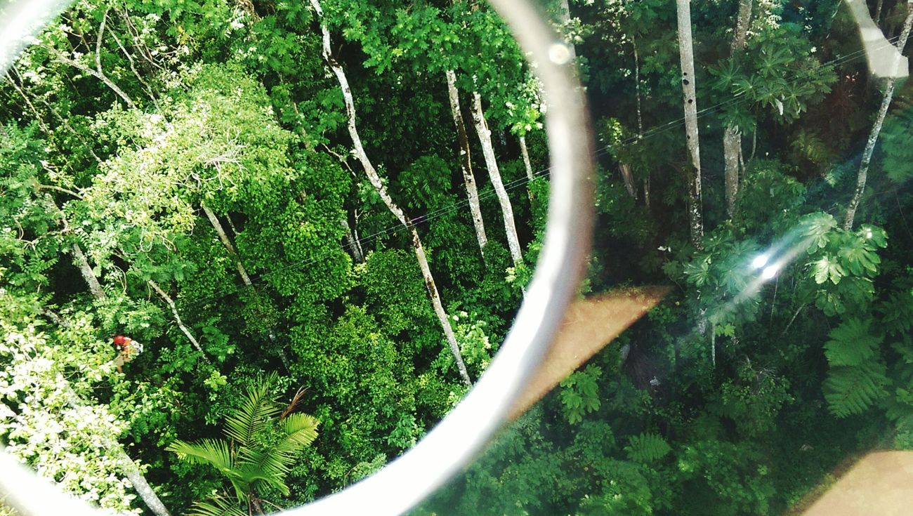 Parquelamarquesa Guaynabo Puerto Rico Zipline Downthehill