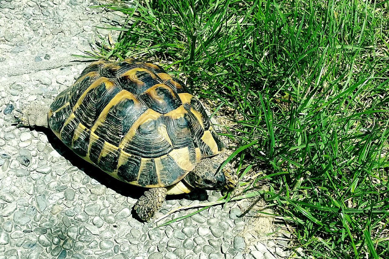 Turtle Green Pets EyeEm Nature Lover Light Black And Yellow  Turtle Day Garden Photography Bepi