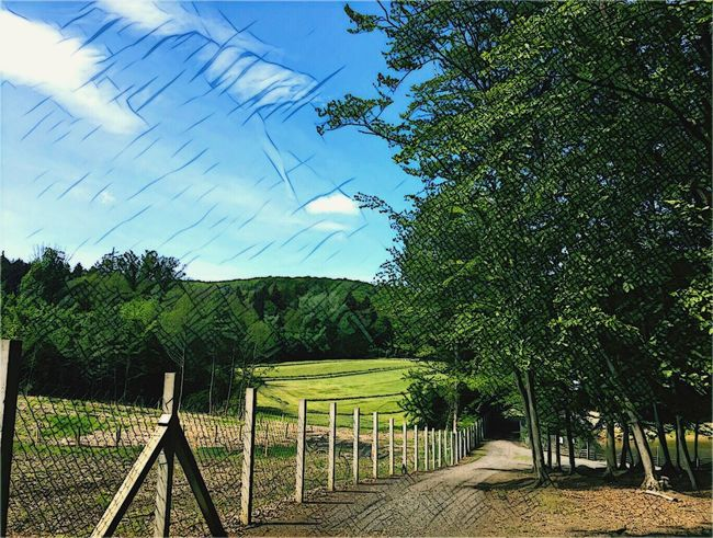 Nature Trees Outdoors Sky Czech Republic Prisma Grass Sunnyday NatureReserve Forest Photo