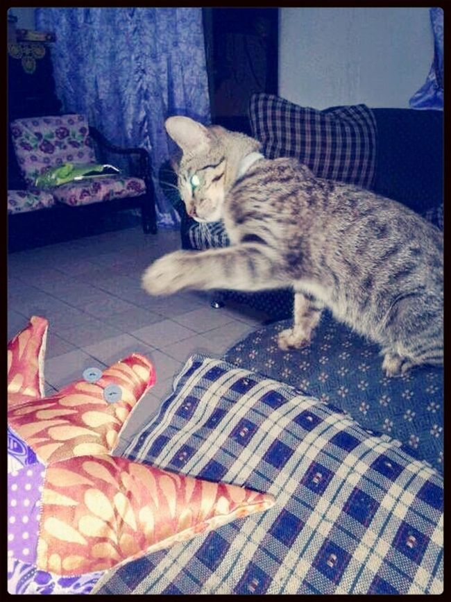 When Brono in action. Nick Jedun gonna miss his best pet .. well nick, at least you got the ' Terkurak ' HAHAHAH!