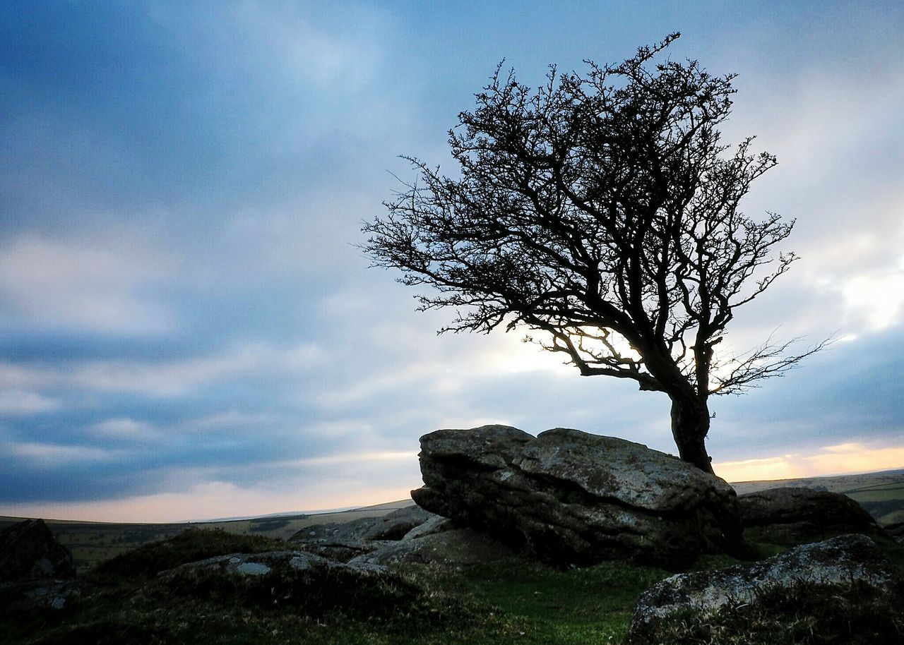 United Kingdom Moorland Dartmoor National Park England🇬🇧 Devon Rocks Haytor Tor Blue Moor  Walk Tree Hawthorn