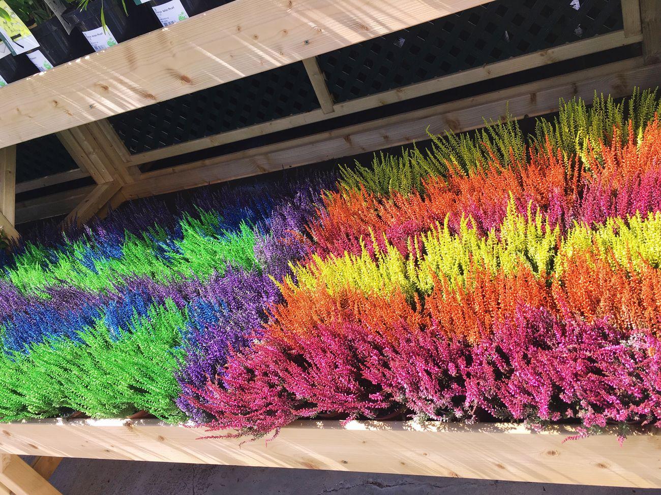 EyeEm Diversity Multi Colored Nature
