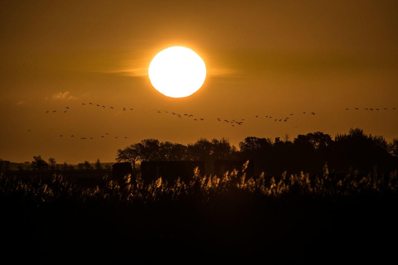 Sunrise at Baltic Sea, Germany Baltic Sea Beauty In Nature Bird Ostsee Sonne Sonnenaufgang Sun Sunrise Sunset Vogel Zingst