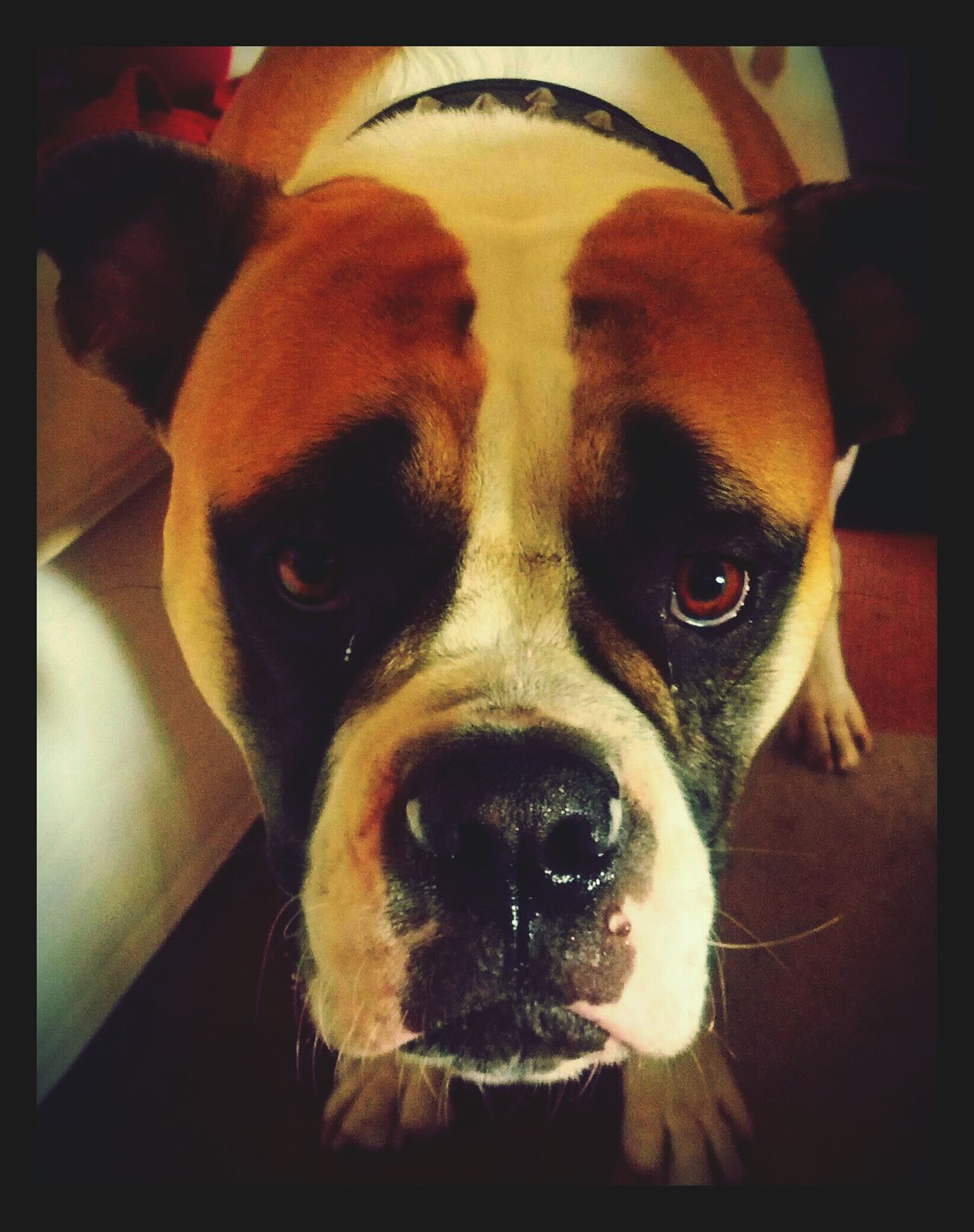 Dog Hund Animels
