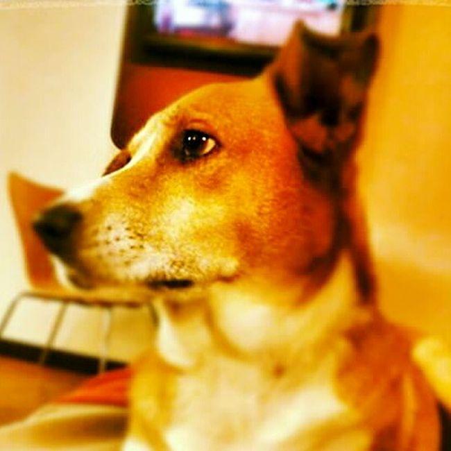 Dogs Dogslife Animal June Bug Pitbull Mix