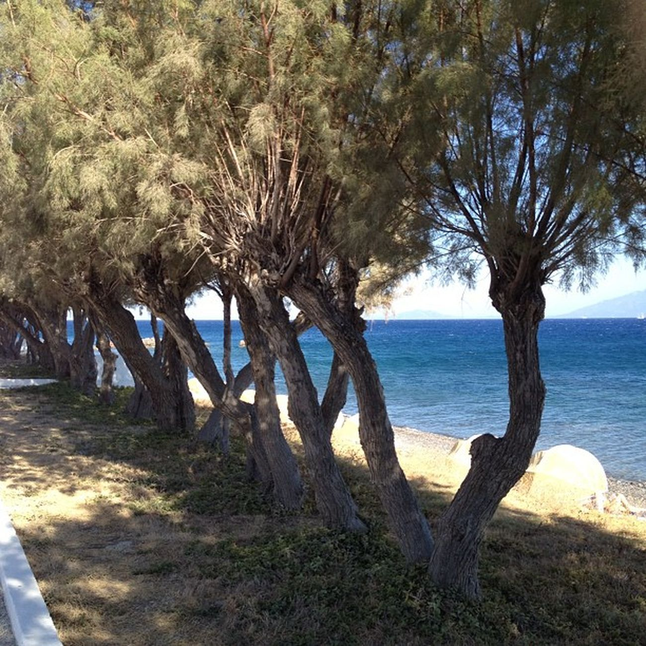 Greece Sea Seaside Skylina view panorama treebeachskyholidaygrasslovenicecool