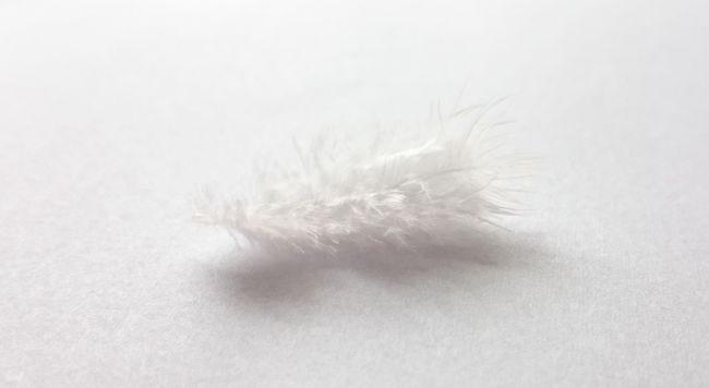 Feather  Germany Light And Shadow Light As A Feather No People Ostfriesland Pure White Showcase July Softness Weiss White White Background White Feather White On White
