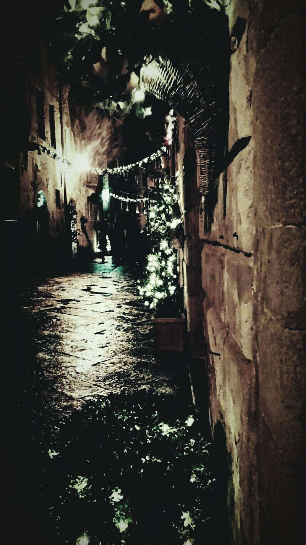 Taking Photos Relaxing Hello World Portraits Enjoying Life Black&white Freedom Pienza (toscana) xmas Lights romanticlights