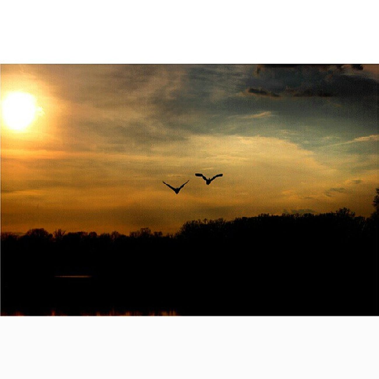 Swans at sunsetLandscape_captures Naturelovers Nature_perfection Underdogs_nature wildlife_perfection skyporn
