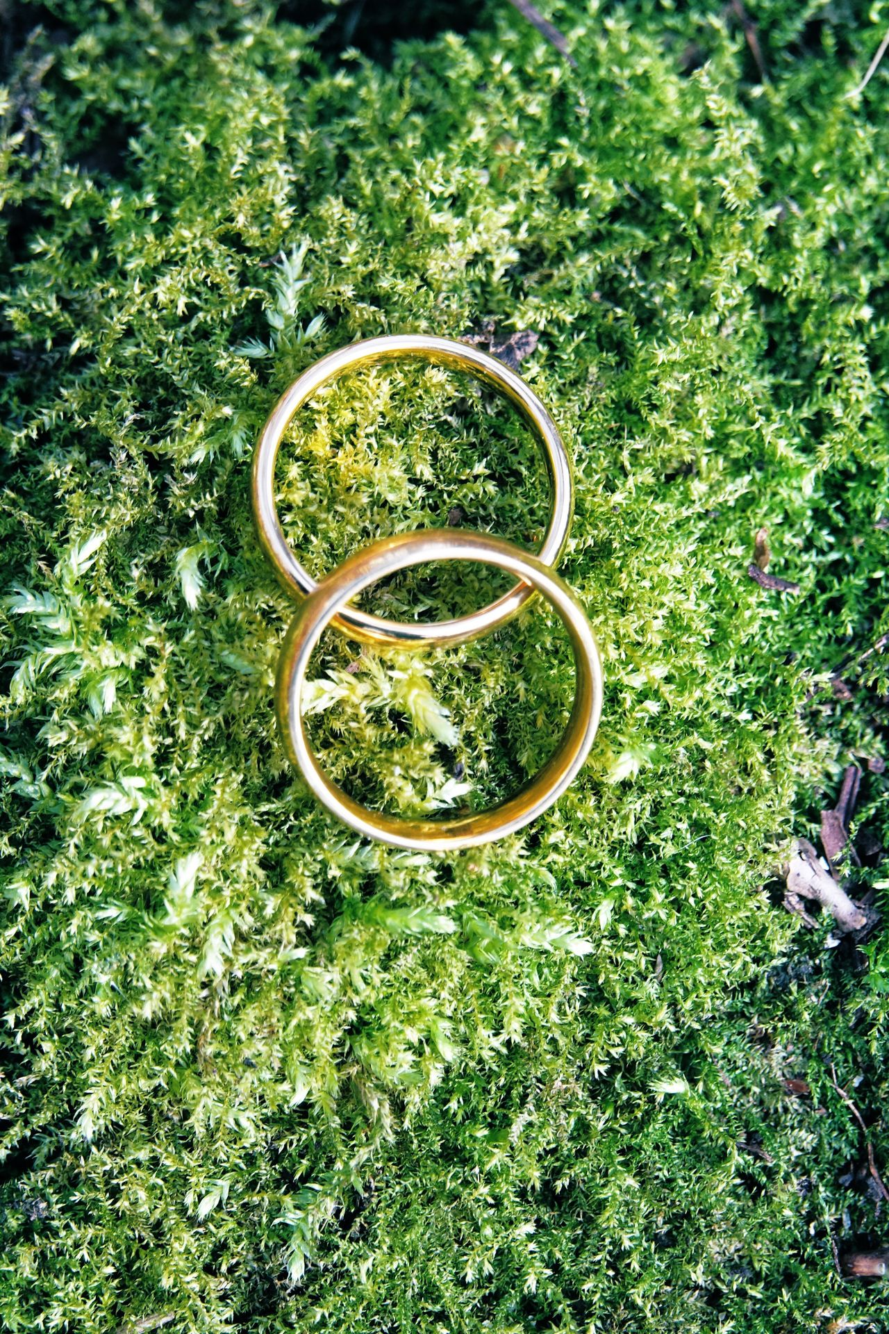 Wedding rings on moss in the forest Green Color Growth High Angle View No People Nature Outdoors Wedding Rings Wedding Ring Wedding Rings Moss Natural Organic