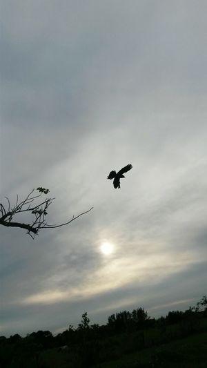 Beautiful Sunsetl Littleblackbird