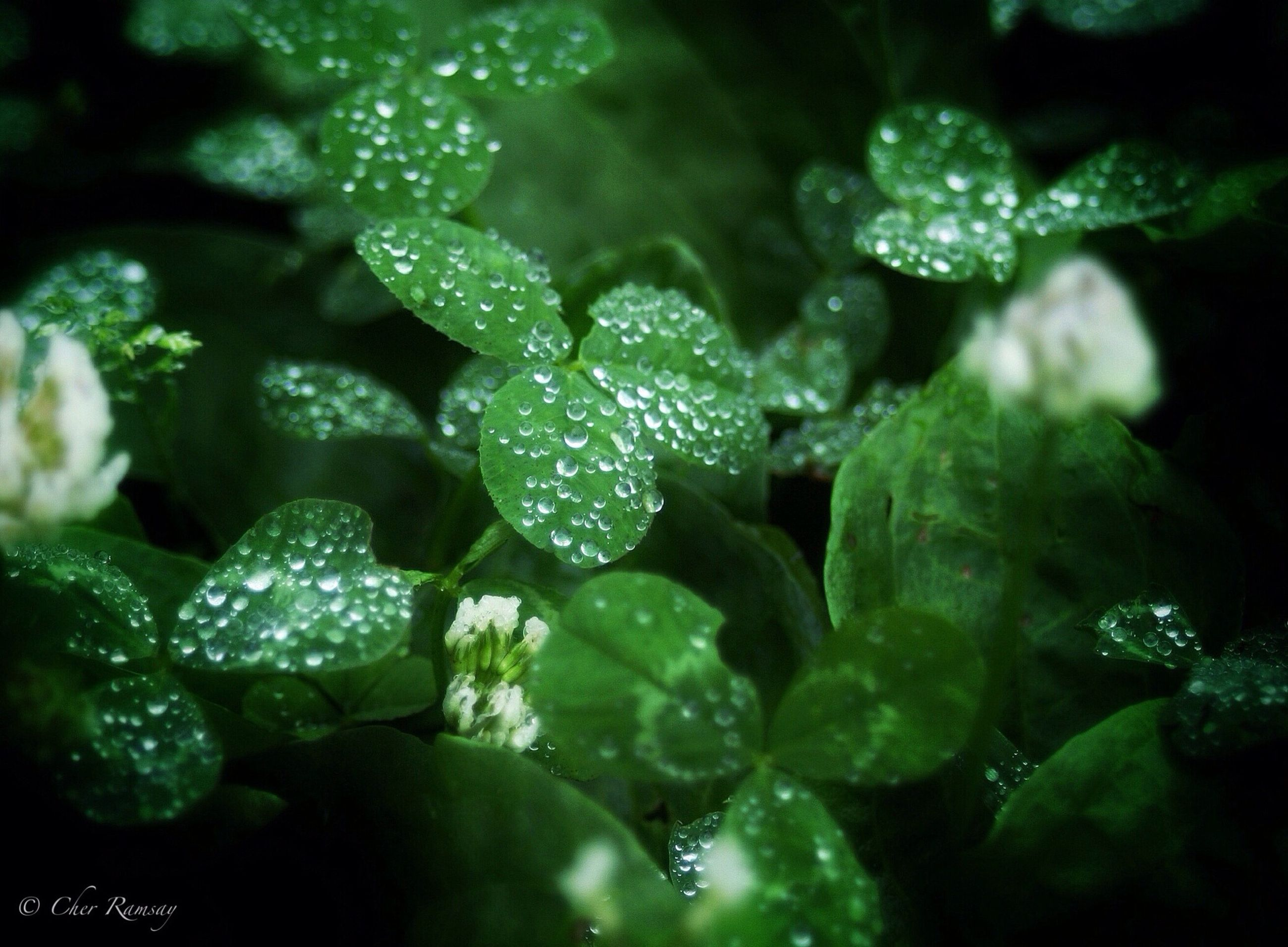 drop, water, freshness, wet, close-up, leaf, green color, growth, dew, beauty in nature, nature, plant, raindrop, fragility, water drop, focus on foreground, purity, rain, no people, droplet