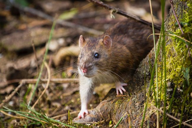 Mouse Topo EyeEm Nature Lover Eyem Nature Lovers  Photography Animals