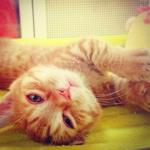 Cute Pets Funny ❤️ Cat