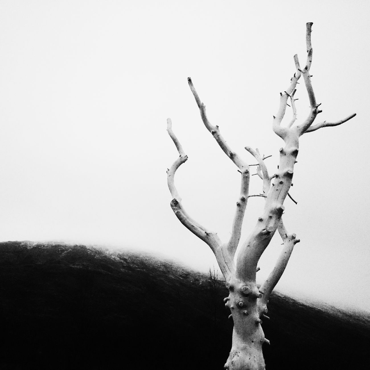 Mobilephoto Mobilephotography Blackandwhite Black & White Monochrome Nature Traveling Minimal AMPt - Still Life (Nature Morte) Iceland