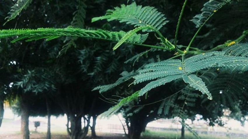 VSCO Vscocam Green Arboles