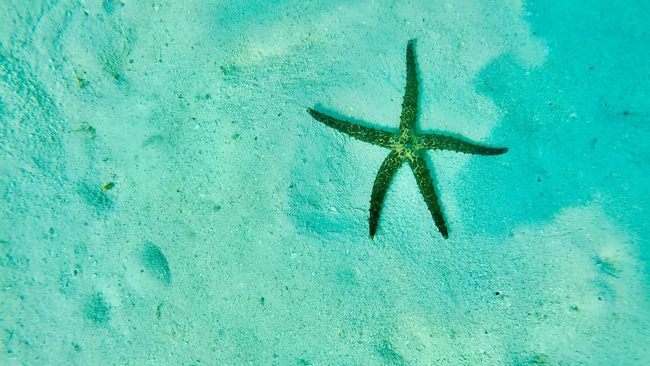 Maldives Snorkeling Blue Water Starfish  Sea Life Underwater Sea Animal Wildlife Beauty In Nature UnderSea Nature No People Fish