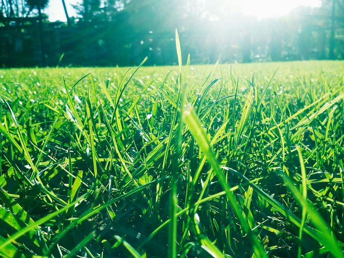 The Grass Is Green In The Grass Marii