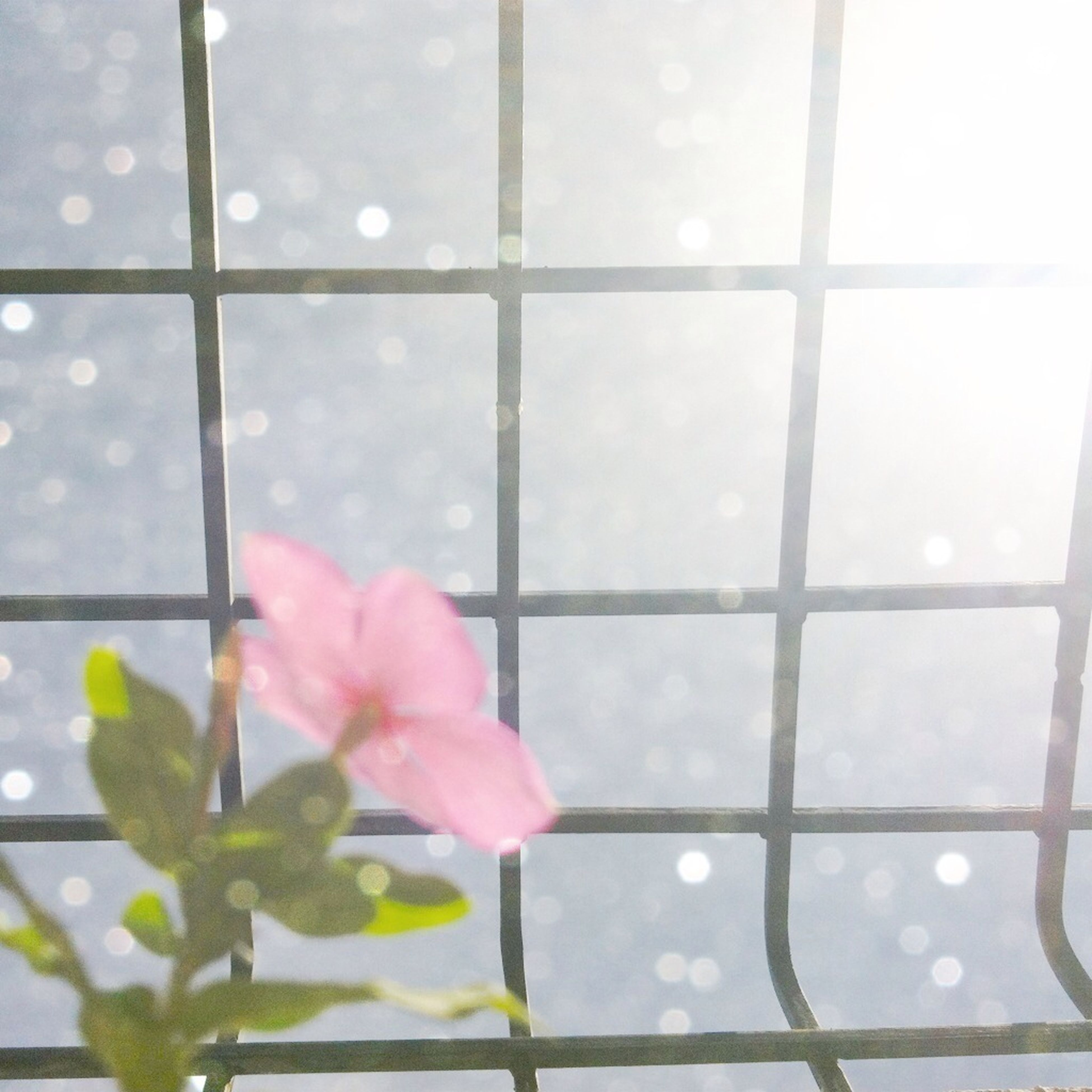 window, flower, fragility, glass - material, freshness, growth, beauty in nature, transparent, leaf, nature, indoors, close-up, plant, green color, day, petal, flower head, no people, sky, pink color