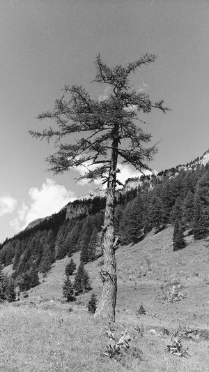 Sky Outdoors Low Angle View Day Nature No People Large Group Of Animals Bird Animal Themes Tree Switzerland Alps Berner Oberland Schweiz 🇨🇭, Wilderness Lenk Mountain Peak Mountain Nature Beauty In Nature Walking Travel Destinations Hiking Simmental Scenics Pine Tree
