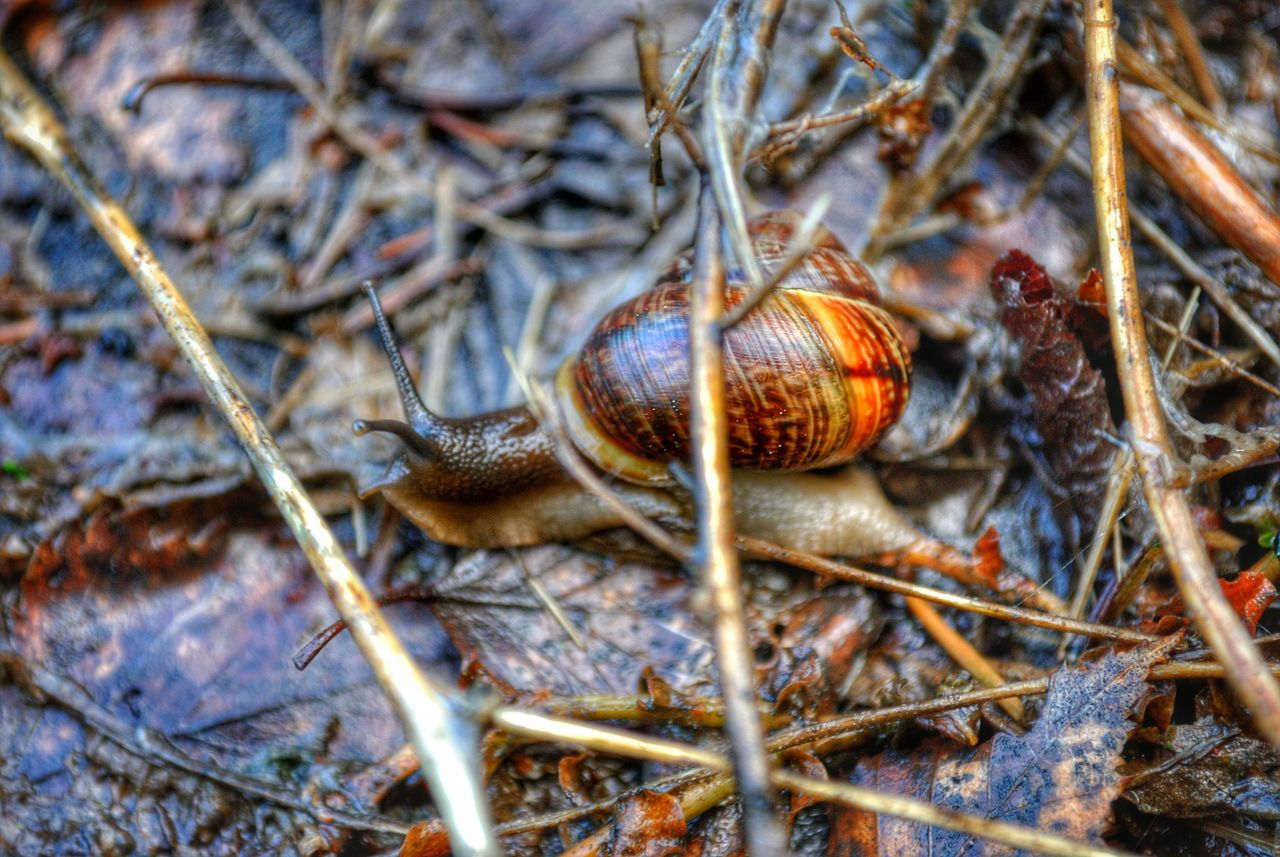 Beauty In Nature Born To Be Wild Brown Close-up Day Focus On Foreground Forest Ground Growth In Motion Motion Motion Capture Natural Pattern Nature Need For Speed Outdoors Plant Selective Focus Shell Snail Snails Tranquility Twig Wet Wild