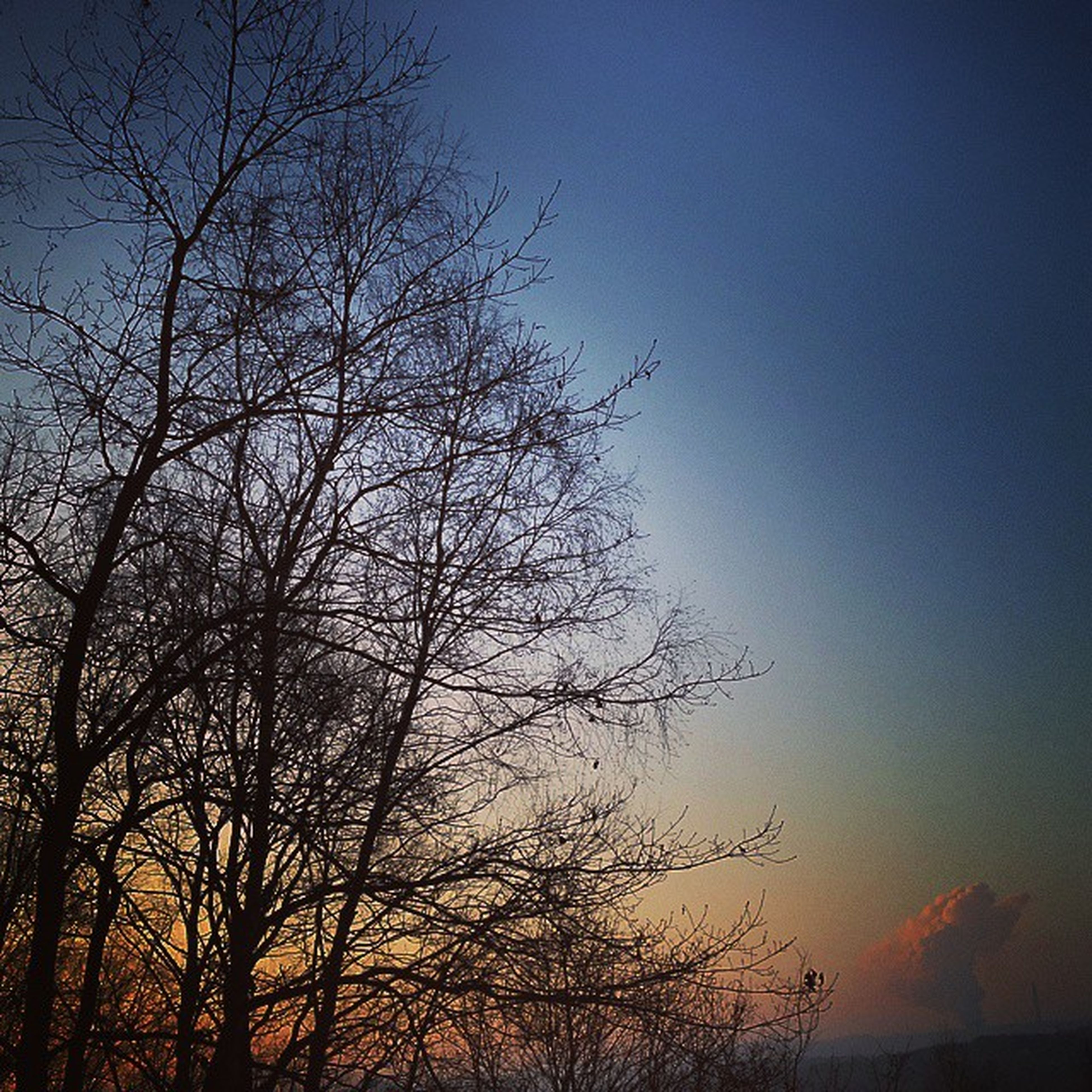 bare tree, tree, silhouette, branch, tranquility, sunset, low angle view, beauty in nature, scenics, tranquil scene, sky, nature, clear sky, dusk, idyllic, outdoors, no people, growth, non-urban scene, blue
