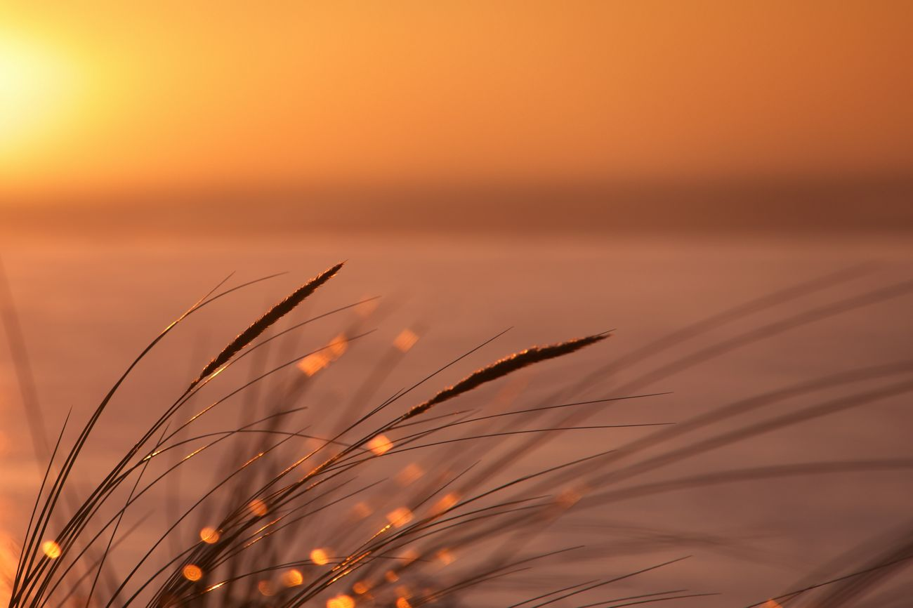 Sunset Nature Beauty In Nature Sun Outdoors Plant TheWeekOnEyeEM EyeEm Best Shots EyeEmBestPics EyeEm Best Edits Horizon Bassin D'Arcachon Dune Du Pyla Golden Hour Bokeh Gold Golden Moment Golden Seeds Sea Sea And Sky