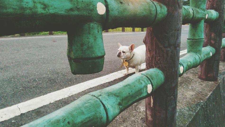 Beautiful stock photos of bulldog, Animal Body Part, Animal Themes, Bulldog, Day