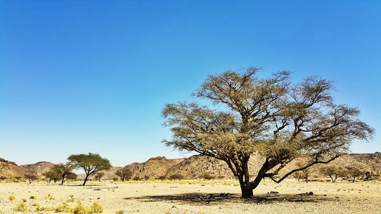 Acacia Beauty In Nature Clear Sky Desert Desert Life Deserts Around The World EyeEm Gallery EyeEm Nature Lover Landscape Nature Nature_collection Non-urban Scene Outdoors Peace Remote Scenics Shadows & Lights The Week On EyeEm Tranquil Scene Tranquility Traveling Tree Vivid