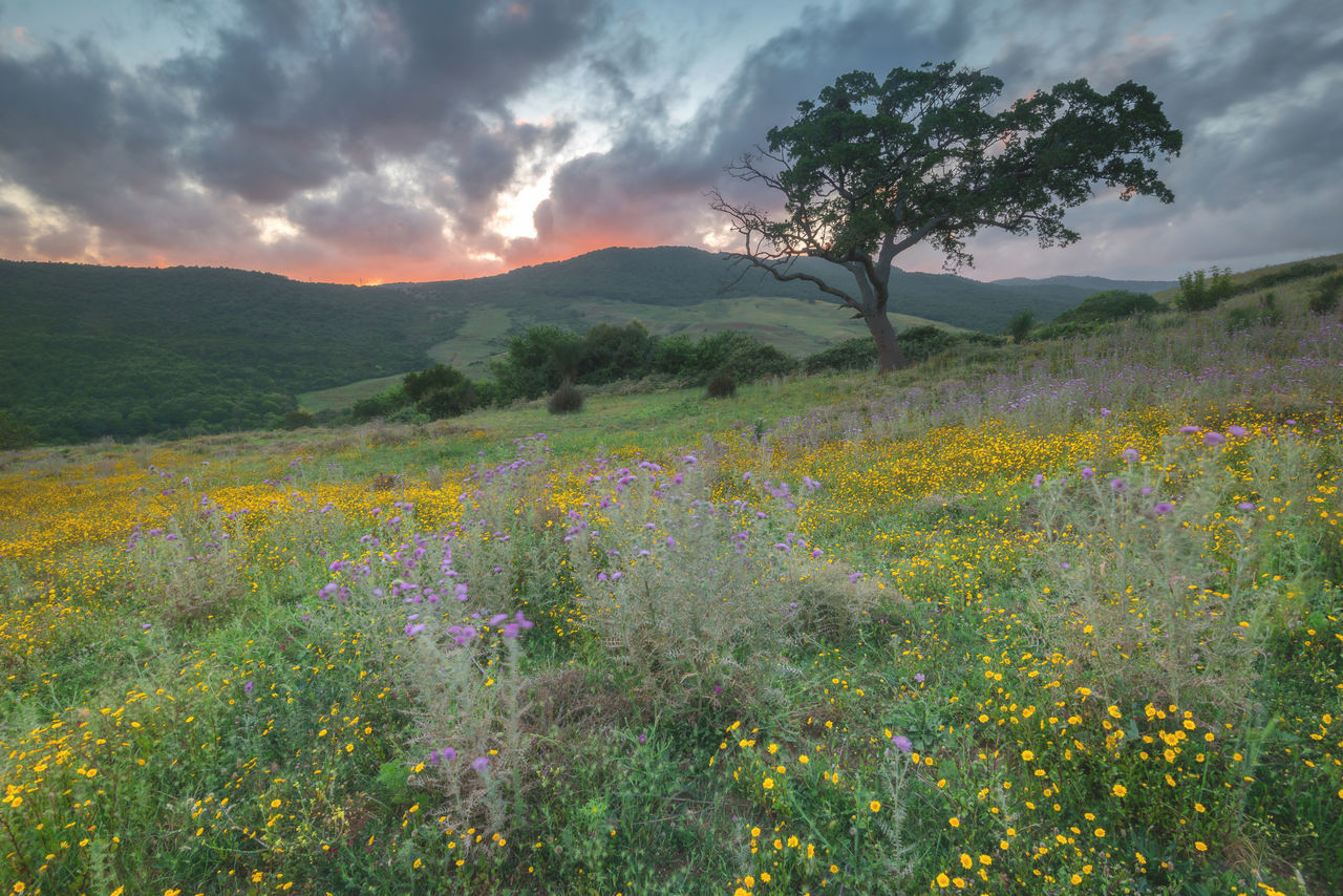 tree, nature, scenics, mountain, landscape, tranquil scene, beauty in nature, outdoors, no people, sky, tranquility, plant, cloud - sky, field, growth, mountain range, day, grass, flower