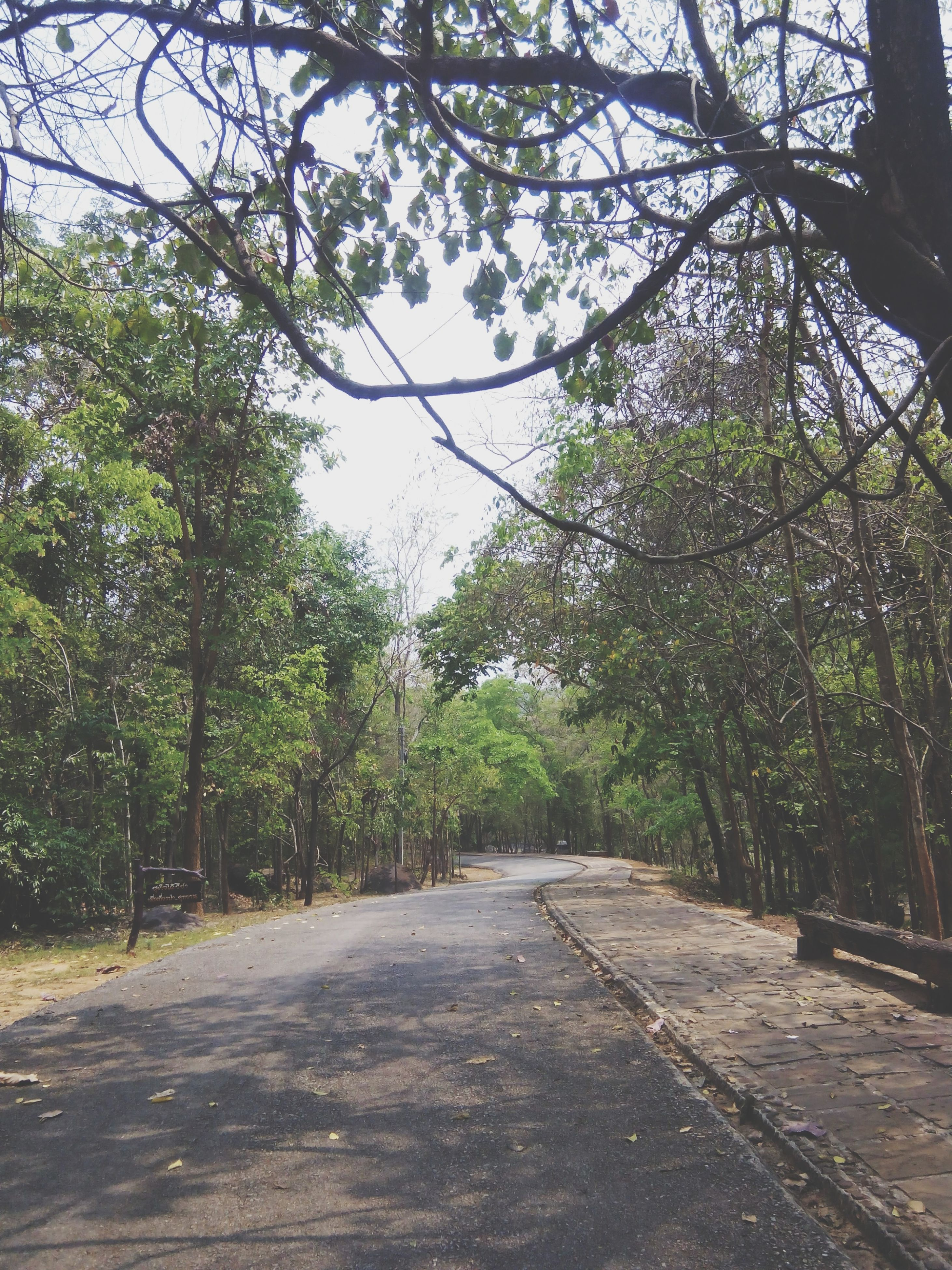 tree, the way forward, growth, road, branch, tranquility, nature, green color, footpath, tranquil scene, diminishing perspective, transportation, beauty in nature, street, tree trunk, day, outdoors, vanishing point, scenics, sunlight