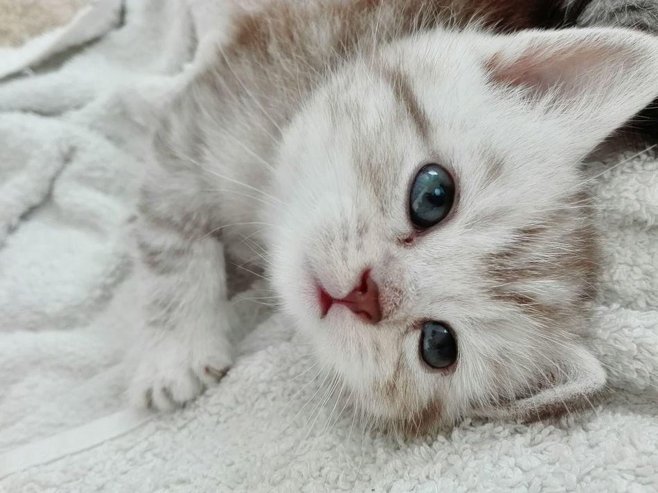 MIELE..Look how i'm a pretty kitty cat!!Isn't she lovely? Animals Cats 🐱 Eyem Eyem Gallery Cat♡ Sweet♡ Puppy Power Kitten Puppy Face Eyemphotography Cats Of EyeEm