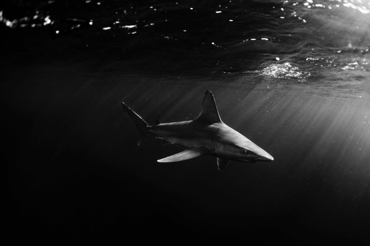 Beautiful stock photos of underwater, animal themes, animals in the wild, swimming