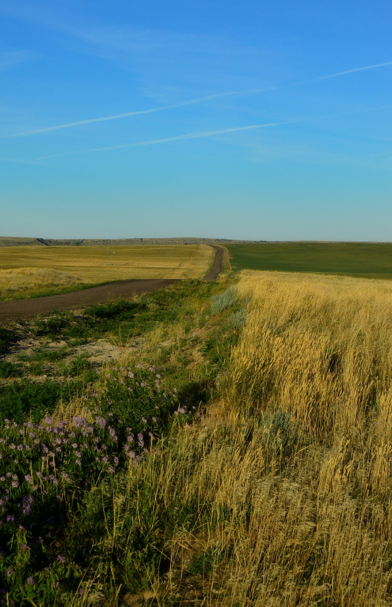 Beauty after fire Prairie Center Wyoming Fire Was Just A Month Ago In July 2016 Grass Seems To Come Back Greener Could See Smoke Quite A Few Mile Away About 3 Miles In Width